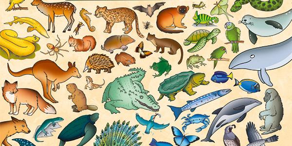 Mappe-animali-NL